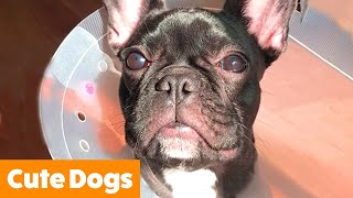 Cute Silly Dogs | Funny Pet Videos