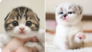 AWW CUTEST baby animals Videos Compilation cutest moments of animals – Cutest Kittens #11