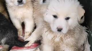 You remember them | Cute Dogs Cute Puppies Funny Video Compilation Aww #Shorts