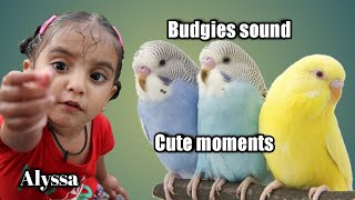 Budgies Sound ! cute Birds ! Beautiful movement ! Birds sound with Piano Music