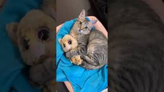 Cute cats 2020 video #Youtubeshortvideo