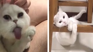 Try Not To Laugh Challenge #1  – Funny Cat Vines compilation 2020