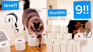 CATS vs TOILET PAPER CHALLENGE! 🧻🙀 (This is AWESOME) | CUTE CATS TIKTOK COMPILATION #14