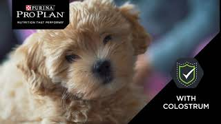Purina Pro Plan- What if you could give your puppy a head start in life?