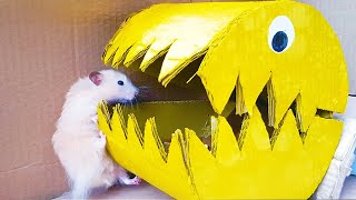 🐹 PAC-MAN HAMSTER MAZE with TRAPS 😱[Obstacle Course]😱