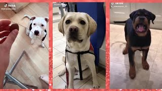 Dogs From TikTok Compilation – Funny, Friendly, Cute Dogs And Puppies