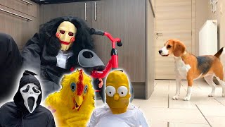 Funny Dogs Get PRANKED Compilation with Beagles Louie & Marie
