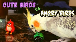 Cute Birds vs Angry Birds