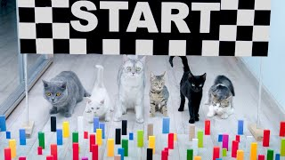 Cats vs Baby Cats Domino Obstacle Funny Cats Games