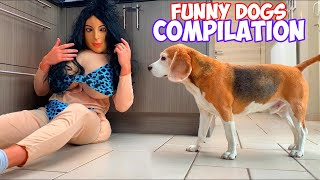 Funny Dogs PRANK Compilation : From Costumes to Ball Pit Parties