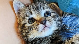 Rescue Super Cute Tiny Kitten Was Sold When She Was Too Young