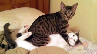 Funniest Cats 😹 – Don't try to hold back Laughter 😂 – Funny Cats Life #01