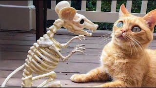 Funny CATS & DOGS – If it wasn't filmed, no one would believe it !!!