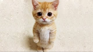 Aww Super Cute ♥ Best Funny Cats and Dogs Compilation #107