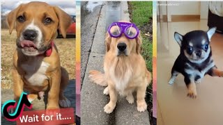 Dogs Are Funniest – TikTok Dog Compilation Part 4 – Cute Dogs