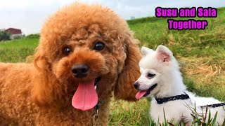 Sala Puppy and Susu Dog Togather – Cute dogs – Dogs day