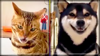 try not to laugh, funny pets, funny cats, funny dogs