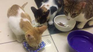 Have a Cats, Your LIFE is BETTER | Cute Cats Video