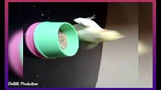 Cute birds trick  Cute and Funny Parrot Videos.