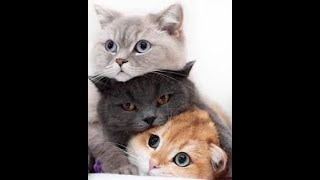 Animals SOO Cute! Funny Cats and Cute Dogs Videos Compilation #3
