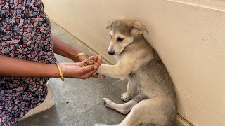 We Requested Puppies Not To Eat Food That Their Mother Gave Them ||Mother Gives Raw Meat to Puppies
