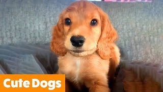 1 Hour of the Cutest Dogs | Funny Pet Videos