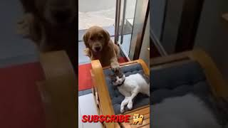 Doge Love Cute Cats #Youtubeshortvideo