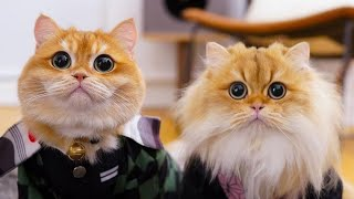 #cats#funnycats#pets#cutecats  Cute and Funny cats Videos Compilation 02