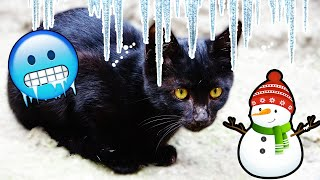 Street Cats See Snow For The First Time (Cute Cats) | Lucky Paws