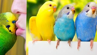 Baby Animals O Funny Parrots and Cute Birds Compilation (2020) Loros Adorables .. #parrot #parrots