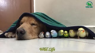 Super Cute And Funny Parrots – Cutest & Naughty Birds In The World 2019
