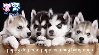 Puppy dogs Cute dogs funny puppies dogs videos compilation Try Not To Laugh #14