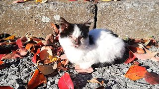 Abandoned Kitten Is Helping Her Blind Brother To Survive On The Streets