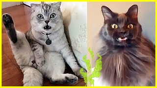 😻 Cats Reaction When They Smell Strange Things 🐱 Funny And Cute Cats