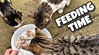 Give Food to Street Cat and Her Kittens 🍗 – Funny and Cute Cats Moment 😹