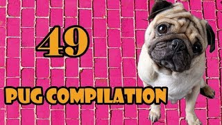 Pug Compilation 49 – Funny Dogs but only Pug Videos | Instapugs