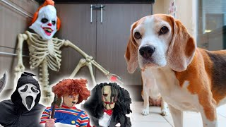 Funny Dogs get PRANKED with Scary & Funny Halloween Costumes 2
