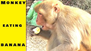 Monkey Eating Banana Near MasitanWali Head || Cute Birds Videos