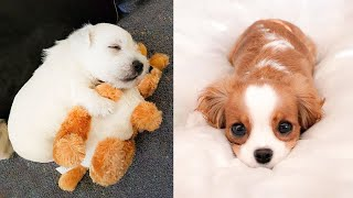 ♥Cute Puppies Doing Funny Things 2021♥ #2  Cutest Dogs