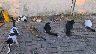 Cute Stray cats Gathered around me and they want food, their bellies are very hungry