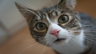 Funny and cute cats video 27