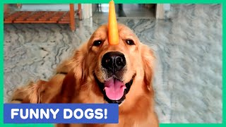 MUST WATCH CUTE AND FUNNY DOGS! Best of the Week