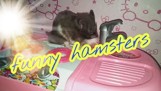 Cute Hamster !!!!! Funny Hamsters Videos compilation #5
