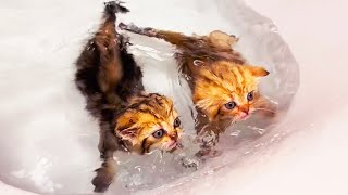 Kittens learn to swim for the first time in the bathroom