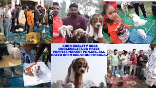 Wholesale Good Quality Dogs | Low Price Puppies Market in Punjab. All Breed Open Dog Show Patiala.