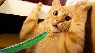 Funny Cats Life 😹 The Funniest Cats 😂 You Will Not Stop Laughing