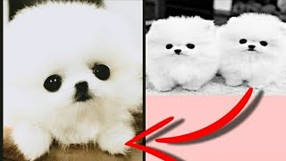 WAA | OMG SO CUTE dogs and cats and others animals #1