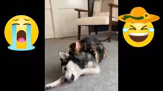 Funny dog @ funny dogs