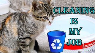 For stray cats i did cleaning – l Cute Kittens – Cute Cats
