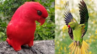 Cute Parrot and Funny Birds awesome compilation | Birds cute and funny Video